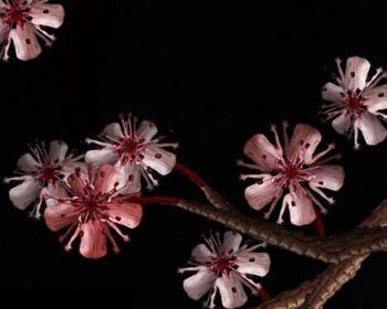 Floral art by Cecelia Webber